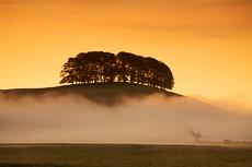 Mist below Trees, Yorkshire Dales