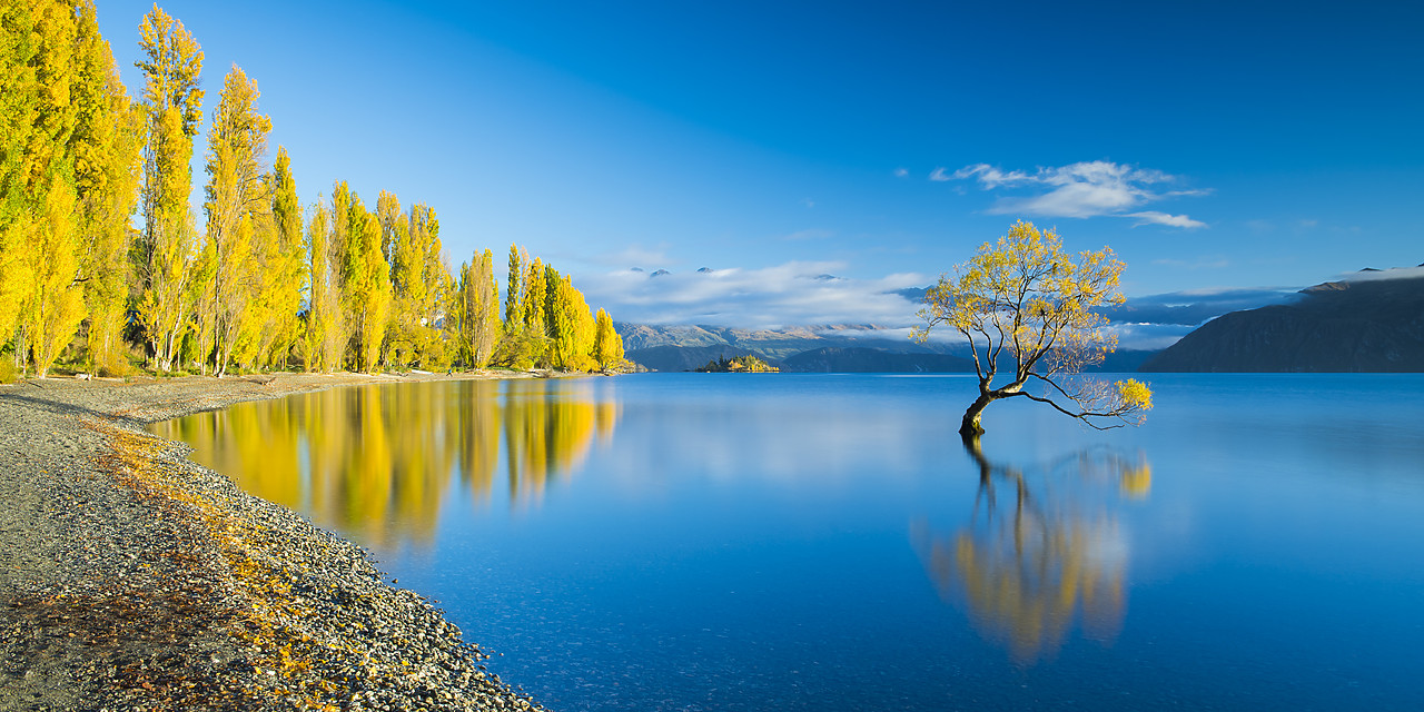 #160188-2 - Wanaka Tree Reflections, Lake Wanaka, New Zealand
