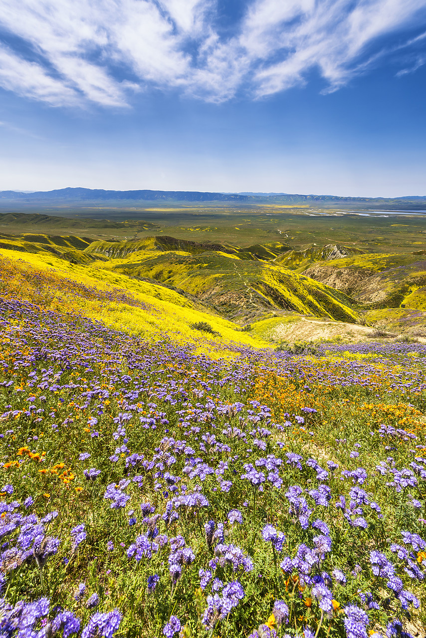 #170259-2 - Super Bloom of Wildflwowers, Carrizo Plain National Monument, California, USA