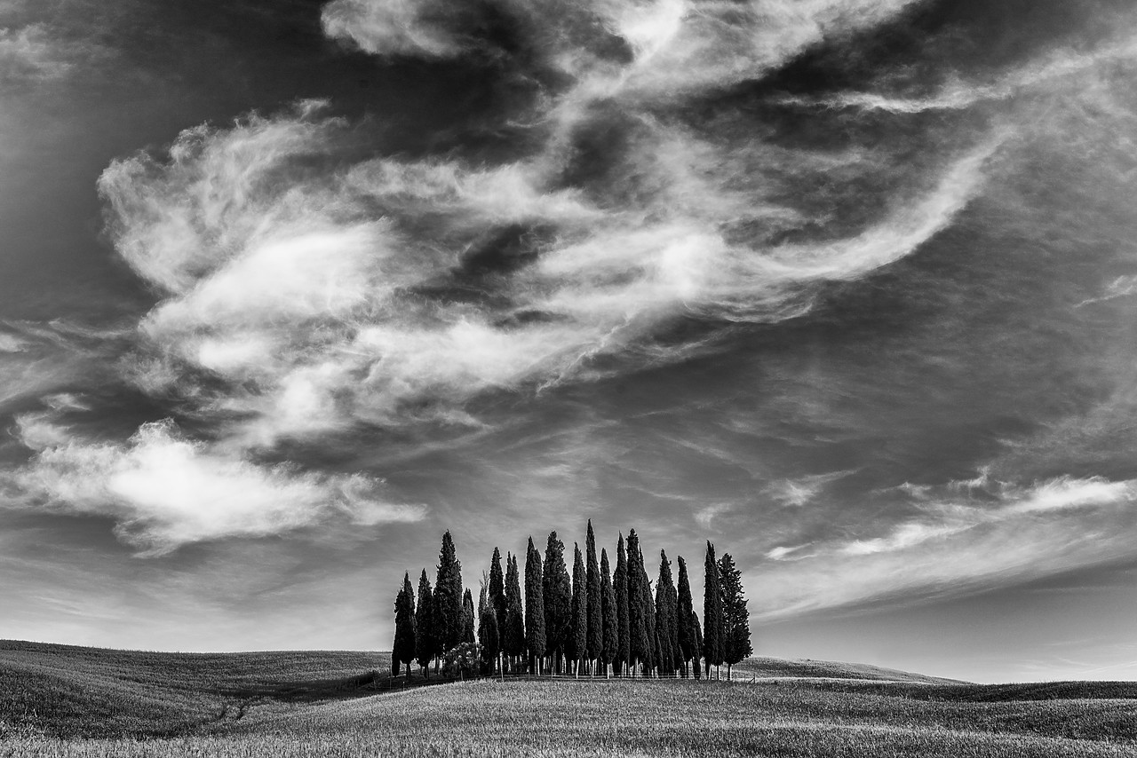 #170750-1 - Cypress Trees & Cloud Formation, Val d'Orcia Tuscany, Italy