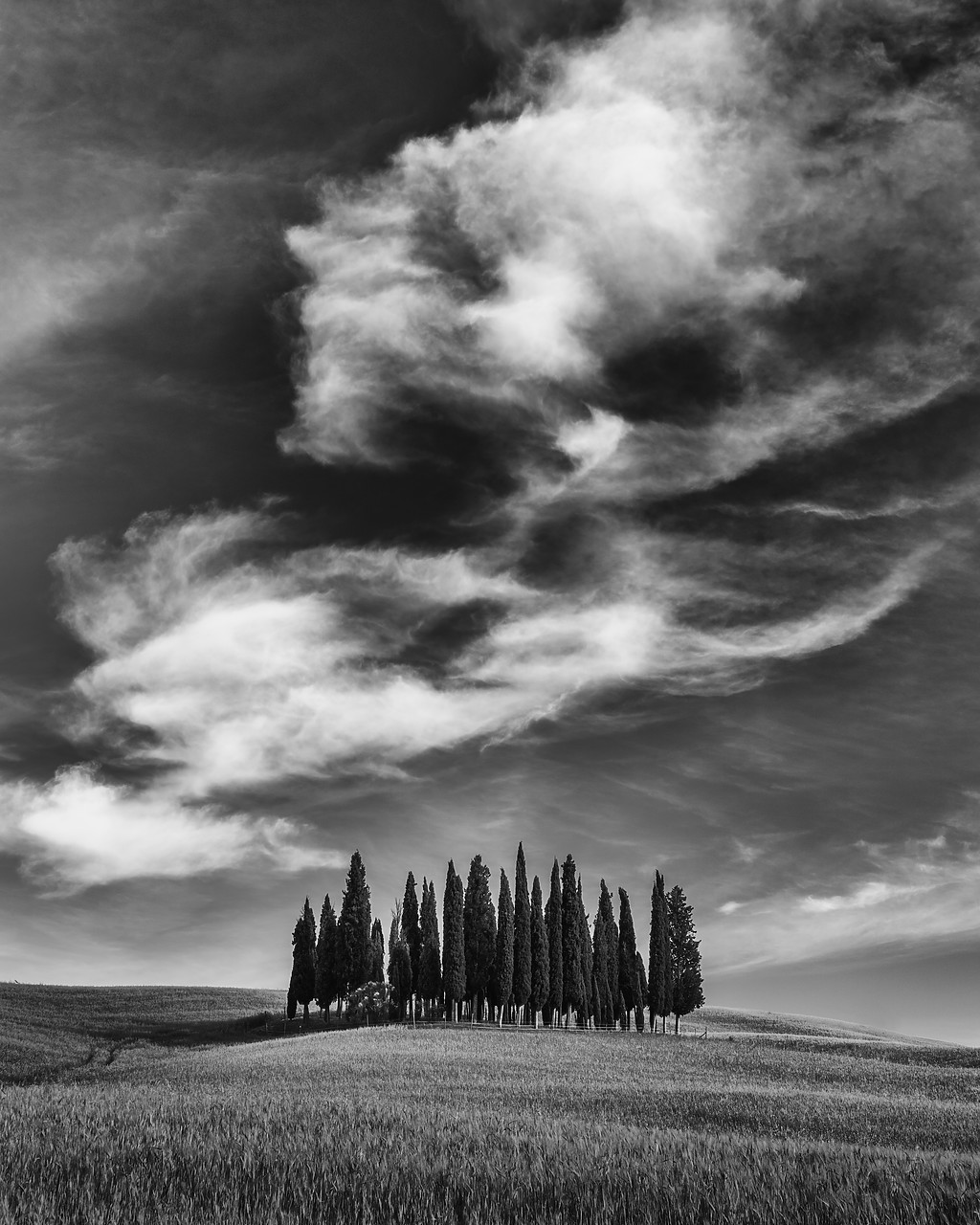 #170750-2 - Cypress Trees & Cloud Formation, Val d'Orcia Tuscany, Italy