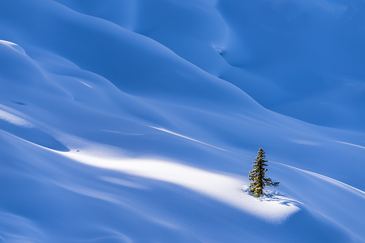 #180054-1 - Single Pine Tree in Winter, Banff National Park, Aberta, Canada