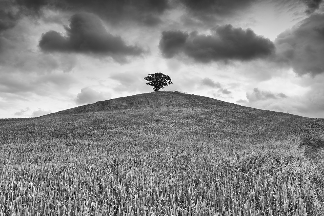 #180209-2 - Lone Tree on Hill, Tuscany, Italy