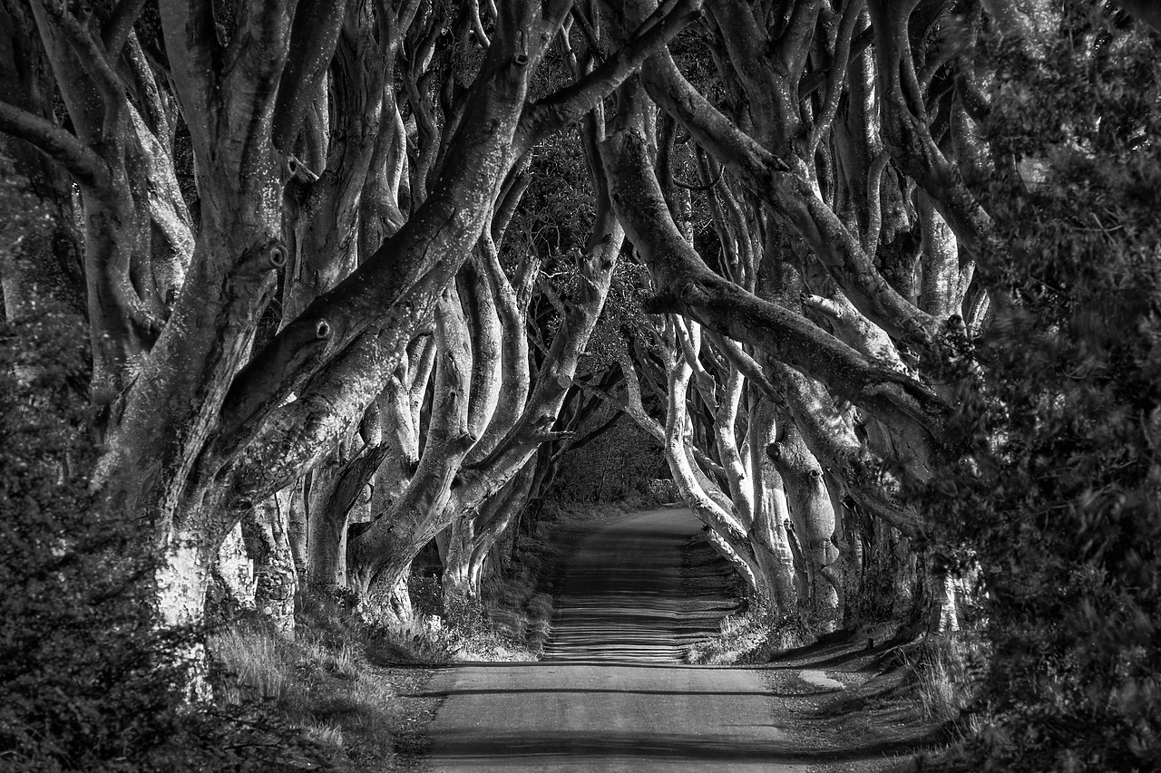 #180389-1 - Dark Hedges, Northern Ireland