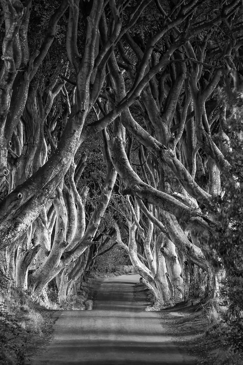 #180389-2 - Dark Hedges, Northern Ireland