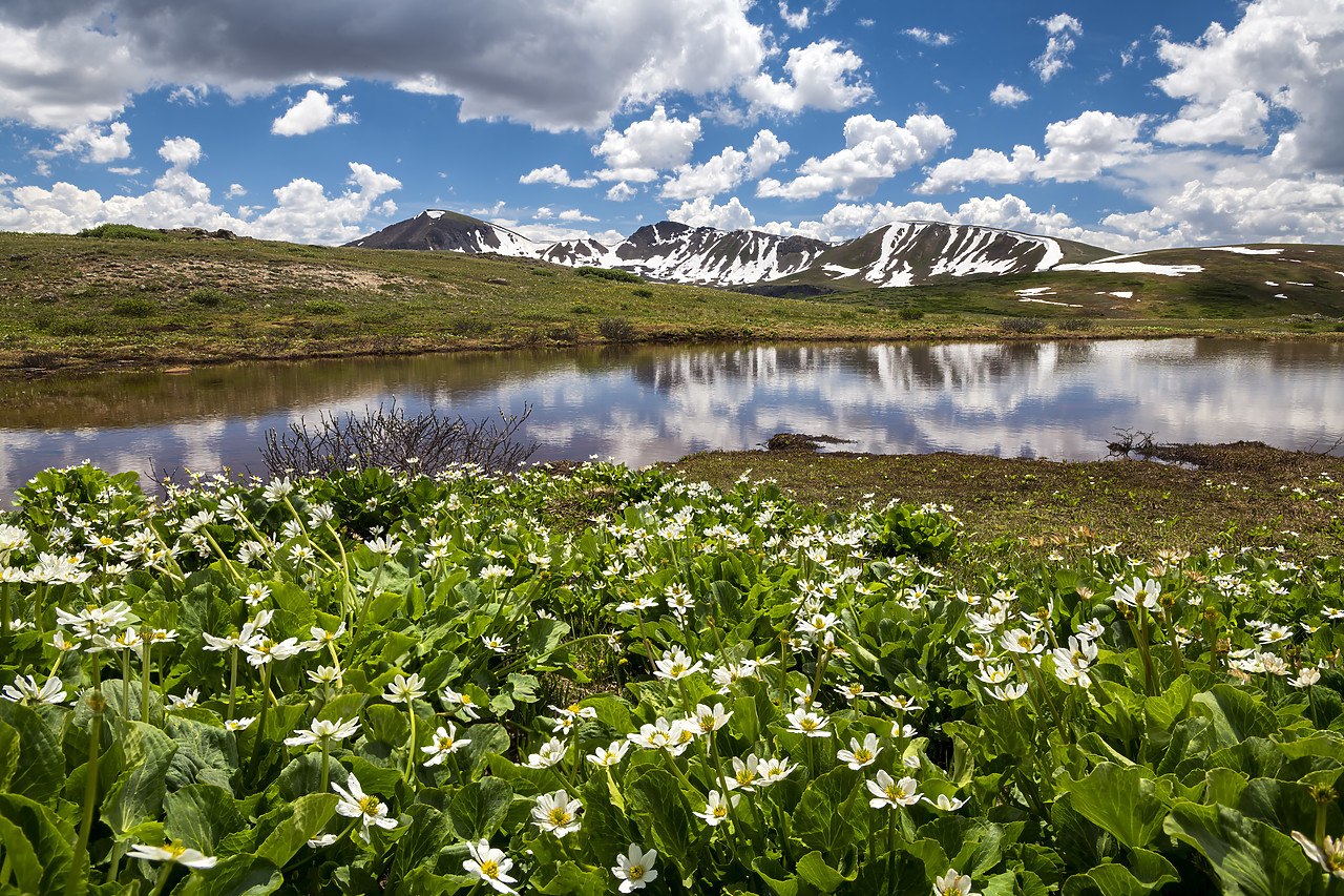#190251-1 - Continental Divide Reflecting in Alpine Lake, Independence Pass, Colorado, USA