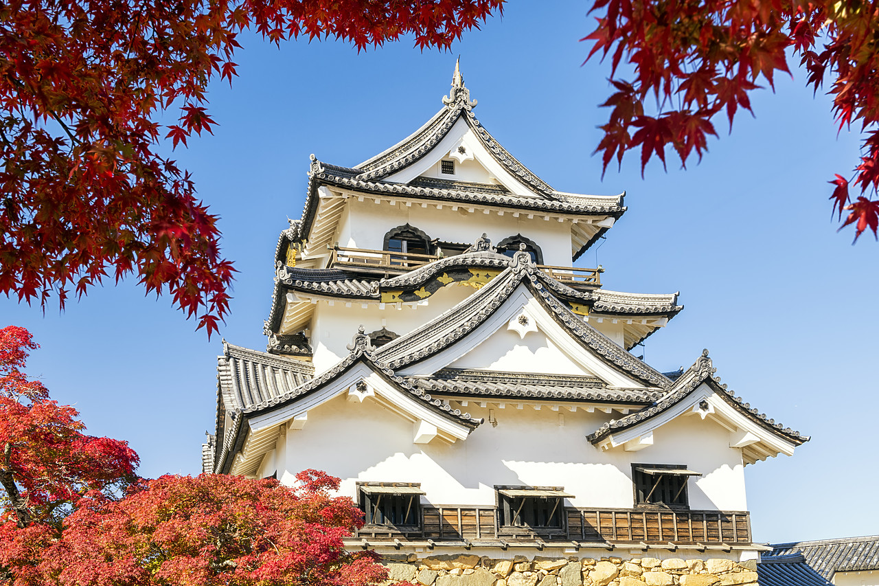 #190695-1 - Hikone Castle in Autumn, Shiga Prefecture, Japan